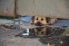 Perro bajo puerta Fotografía de archivo libre de regalías