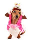 Perro basset Imagenes de archivo