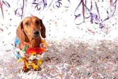 Perro basset de Sat en el partido del carnaval Imágenes de archivo libres de regalías