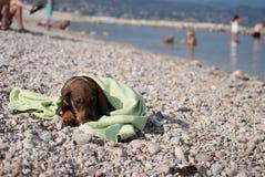 Perro basset del perrito que miente en la playa del stoney Foto de archivo libre de regalías