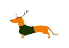 Perro basset en traje de la Navidad Fotos de archivo