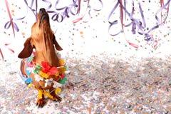 Perro basset feliz en el partido del carnaval Fotos de archivo libres de regalías