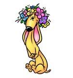 perro basset hermoso Foto de archivo libre de regalías
