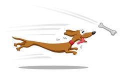 Perro basset que corre para el hueso Imagen de archivo libre de regalías