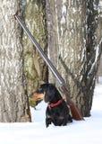 Perro basset y escopeta negros cerca del árbol de abedul en bosque del invierno Foto de archivo