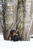 Perro basset y escopeta negros cerca del árbol de abedul en bosque del invierno Imagen de archivo