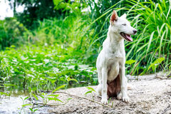 Perro blanco Imagenes de archivo
