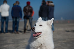 Perro blanco con la gente Foto de archivo
