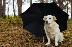 Perro blanco debajo del paraguas en el bosque Imagen de archivo libre de regalías