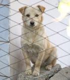 Perro blanco detrás de un retrato de la cerca Fotos de archivo