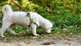 Perro blanco durante un paseo
