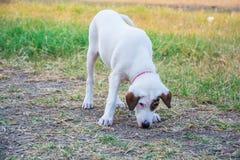 Perro blanco en el parque imagen de archivo