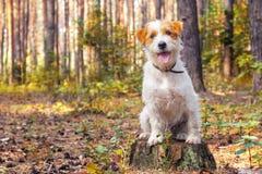 Perro blanco en el parque del otoño Fotos de archivo