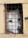 Perro blanco en la pequeña jaula del rectángulo Fotografía de archivo