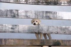Perro blanco lindo en balcón de madera viejo fotografía de archivo