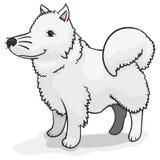 Perro blanco mullido del samoyedo que espera a su dueño, ejemplo del vector stock de ilustración