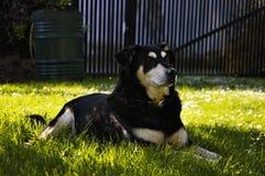 Perro blanco negro Imagenes de archivo