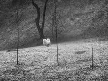 Perro blanco peludo en el parque Foto de archivo