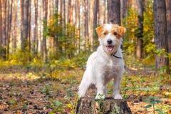 Perro blanco que juega en el parque Foto de archivo