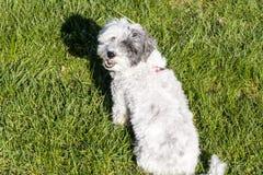 Perro blanco que se sienta en un jardín de la primavera foto de archivo libre de regalías