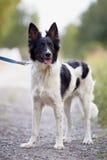 Perro blanco y negro. Foto de archivo