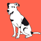 Perro blanco y negro elegante Mejor amigo del hombre Foto de archivo