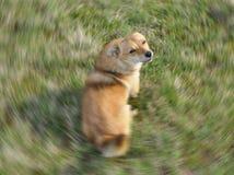 Perro blured enfoque radial en fondo imagen de archivo