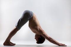 Perro boca abajo de la actitud de la yoga Foto de archivo libre de regalías
