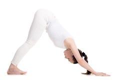 Perro boca abajo de la actitud de la yoga Fotografía de archivo libre de regalías