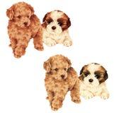 Perro bonito Imagen de archivo libre de regalías
