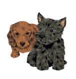 Perro bonito Imágenes de archivo libres de regalías