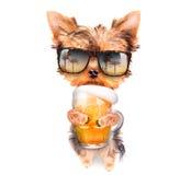 Perro borracho con la cerveza fotografía de archivo
