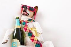 Perro borracho de la resaca foto de archivo libre de regalías