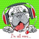 Perro Bullmastiff del vector con las auriculares del teléfono Imagen de archivo libre de regalías