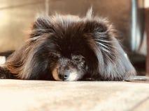 Perro cansado imagen de archivo
