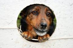 Perro capturado Fotografía de archivo libre de regalías