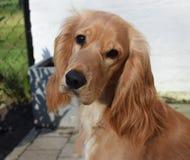 Perro capturado afuera fotografía de archivo libre de regalías