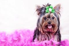 Perro casero Imagen de archivo