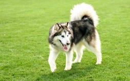 Perro casero Foto de archivo libre de regalías