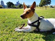 Perro casero en el parque Imagen de archivo libre de regalías