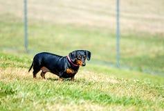 Perro casero lindo en prado Fotografía de archivo