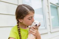 Perro casero playingkissing de la chihuahua del perrito de la muchacha Imagen de archivo