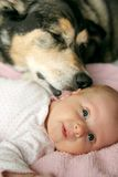 Perro casero que besa al bebé recién nacido Foto de archivo libre de regalías