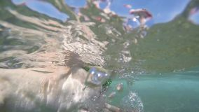 Perro casero que intenta nadar en el mar metrajes