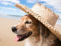 Perro casero que lleva un sombrero del sol de la paja en la playa imagen de archivo
