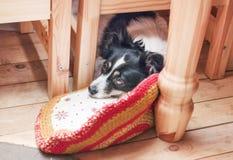 Perro casero triste debajo de la tabla Foto de archivo libre de regalías