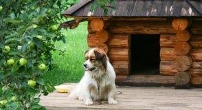 Perro cerca de la caseta de perro Imagen de archivo libre de regalías
