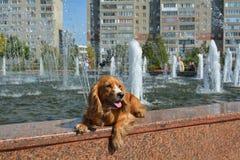 Perro cerca de la fuente imagen de archivo libre de regalías