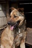 Perro cerca de una perrera Fotografía de archivo libre de regalías