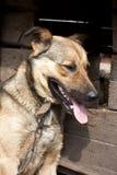 Perro cerca de una perrera Fotos de archivo libres de regalías